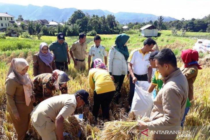 Mahasiswa Polbangtan lakukan pengubinan padi sawah di Tapsel