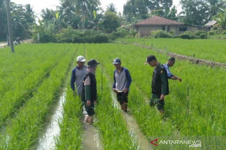 Mahasiswa Polbangtan ikuti sekolah lapang di Simalungun