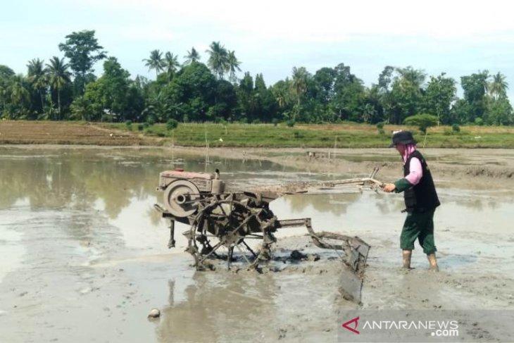 Di Simalungun, Mahasiswa Polbangtan bantu olah lahan petani