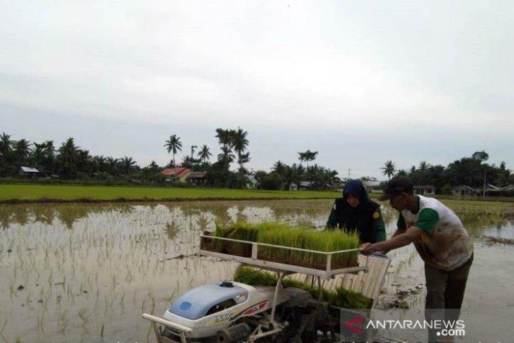 Mahasiswa Polbangtan bantu tanam padi petani Langkat gunakan Transplanter