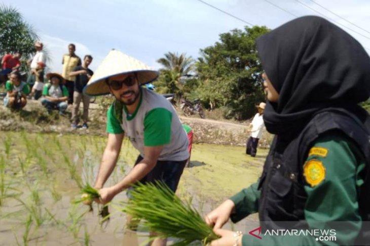 Mahasiswa Polbangtan tanam padi bersama
