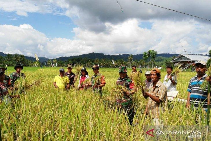 Mahasiswa Polbangtan Medan terlibat panen perdana padi di Nias