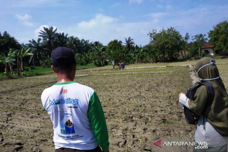 Ditengah COVID-19, Polbangtan Medan bina petani tetap produktif