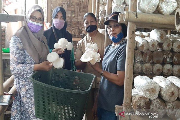 Polbangtan Medan segera bina petani Jamur Tiram Deli Serdang dari hulu ke hilir