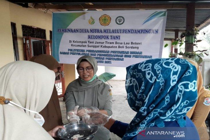 Polbangtan Medan latih petani mengolah sate dan bakso Jamur Tiram di Deli Serdang