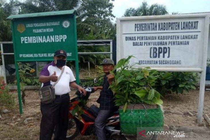 Atas binaan Polbangtan Medan, BPP Secanggang panen Bibit Kakao dan dibagikan ke koptan