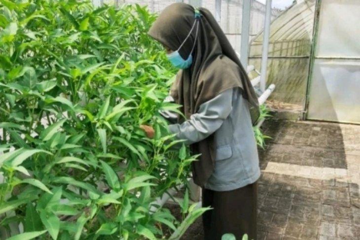 Dukung program Kementan, BPPSDMP fasilitasi Polbangtan Medan kembangkan TEFA hidroponik modern